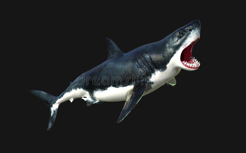 Больший изолят белой акулы на черной предпосылке с путем клиппирования иллюстрация штока