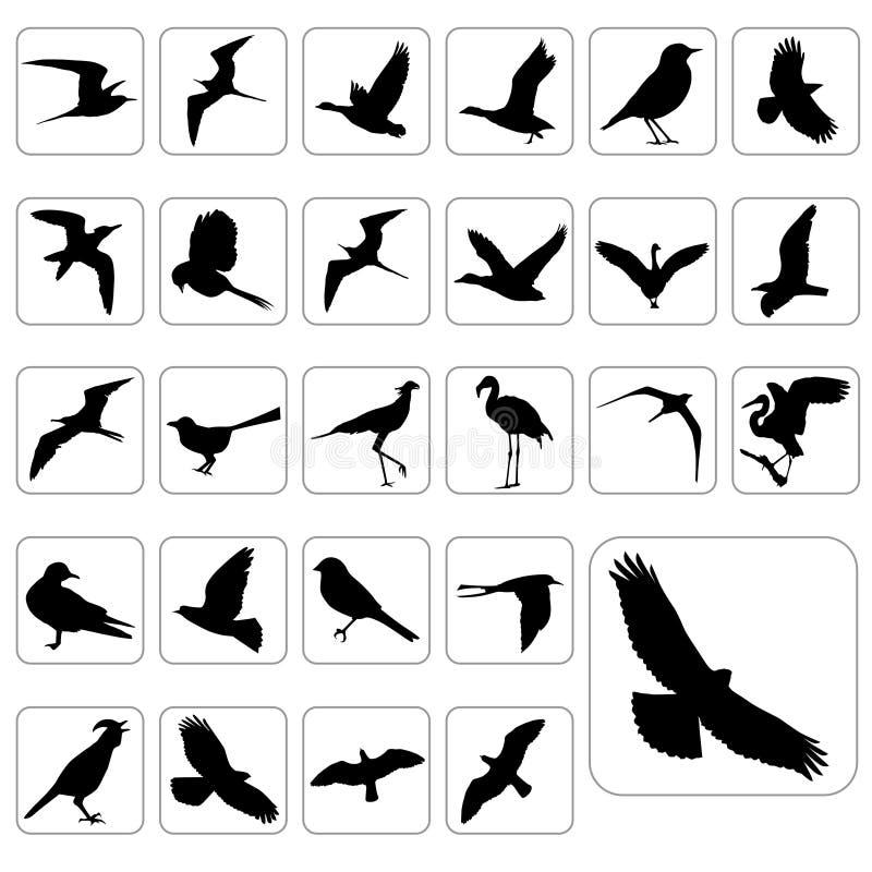 большими вектор установленный птицами иллюстрация вектора