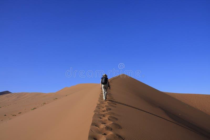 большое взбираясь sossusvleiand песка дюны стоковые изображения rf