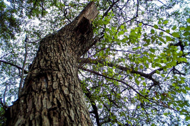 Большое дерево заботы дерева, который нужно выдержать стоковая фотография