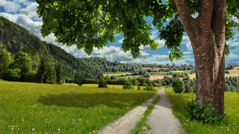 Большое дерево, луг с цветками, день лета солнечный стоковые фотографии rf