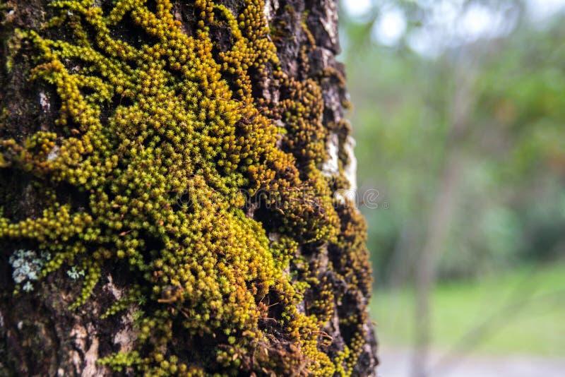 Большое дерево с зеленым mos стоковое изображение rf