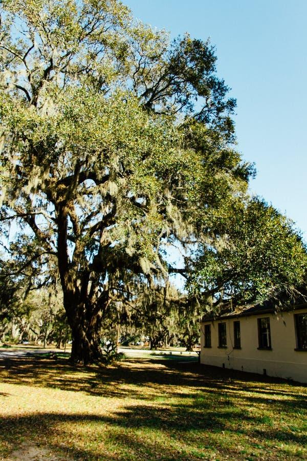 Большое красивое дерево около небольшого деревянного дома в поле стоковые изображения