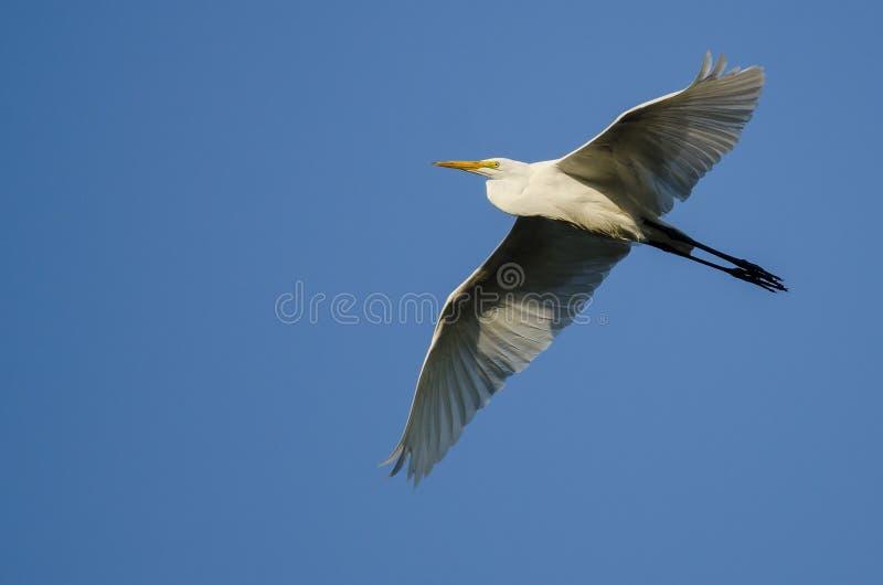 Большое летание Egret в голубом небе стоковое изображение