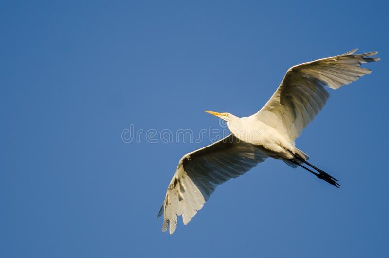 Большое летание Egret в голубом небе стоковое фото