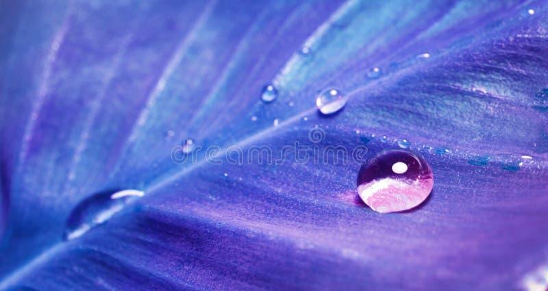 Большое падение воды сверкнает в солнечном свете на голубых лист цвета стоковые фото
