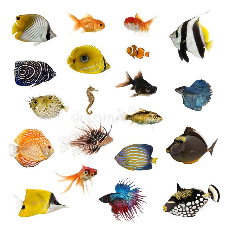 Большое собрание рыб, любимчика и экзотического, в различном положении стоковое изображение