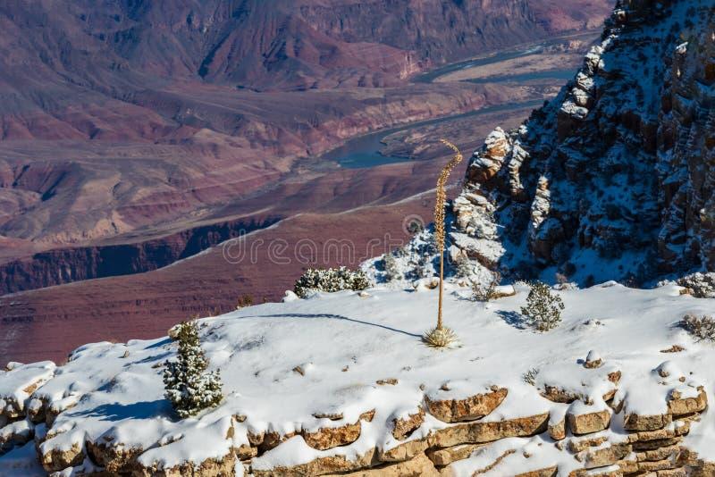 Большое Cayon; снег покрыл мезу с заводом дерева и юкки Красный каньон, Колорадо ниже стоковая фотография