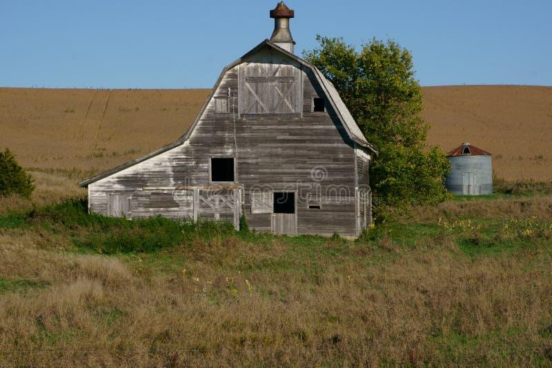 Большой белый амбар сидя вдоль стороны кукурузное поле стоковое изображение rf