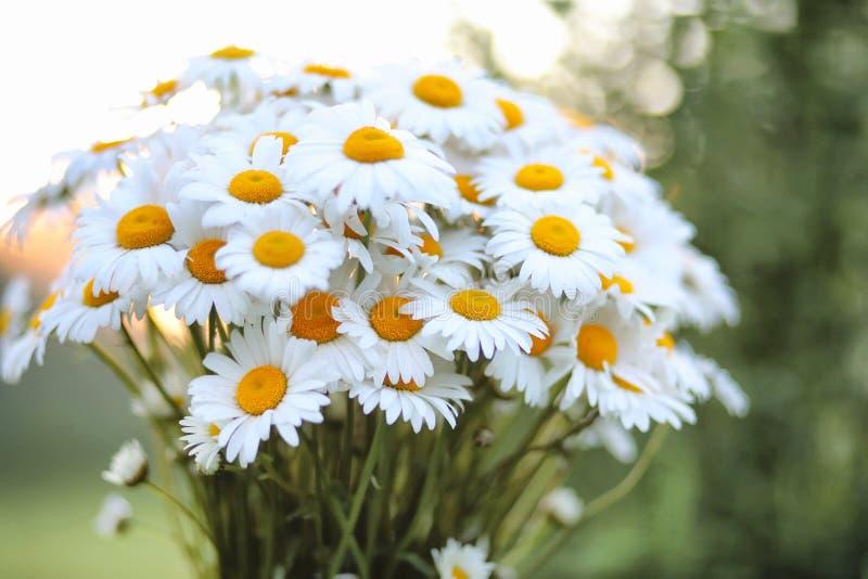 Большой букет стоцветов поля стоковое изображение rf