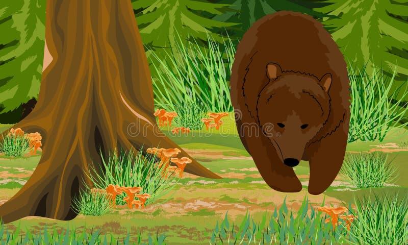 Большой бурый медведь в хоботах леса осени лиственных деревьев и спруса, мхах и травах, лисичках грибов леса, ston бесплатная иллюстрация