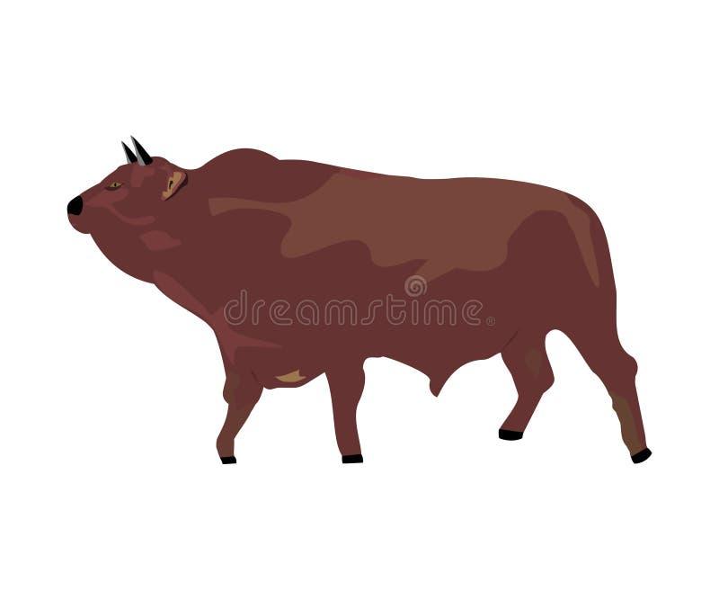 Большой бык стоковые изображения rf