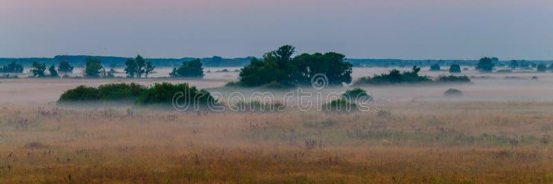 Большой выгон с кустами около леса в тумане утра стоковое изображение rf