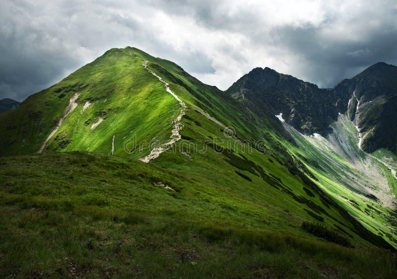 Большой зеленый холм стоковые фотографии rf