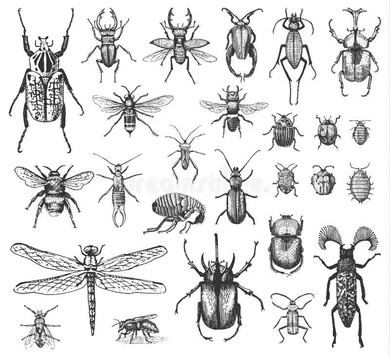 Большой комплект жуков и пчел черепашок насекомых много видов в винтажным стиле нарисованном опытным человеком выгравировал woodc иллюстрация штока