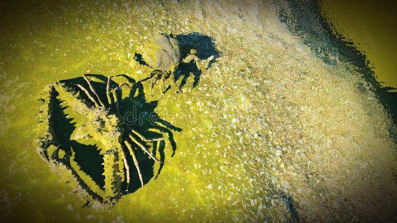 Большой краб на крабе beachBig на пляже бесплатная иллюстрация