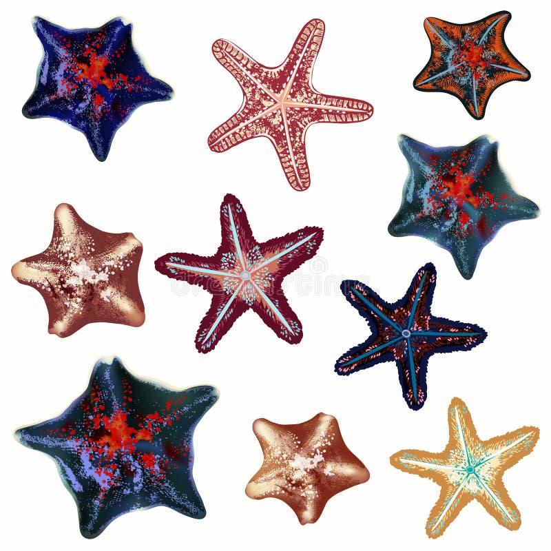 Большой набор морских звёзд моря, дизайн настроения лета иллюстрация штока