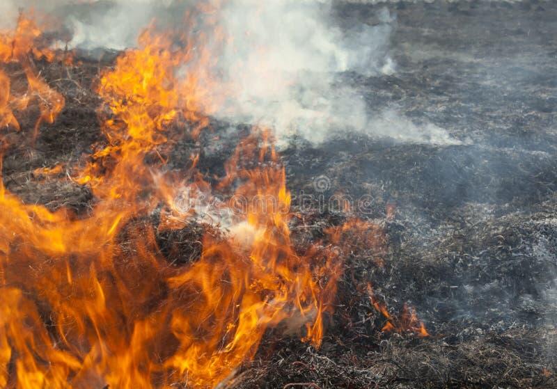 Большой огонь в поле стоковое фото rf