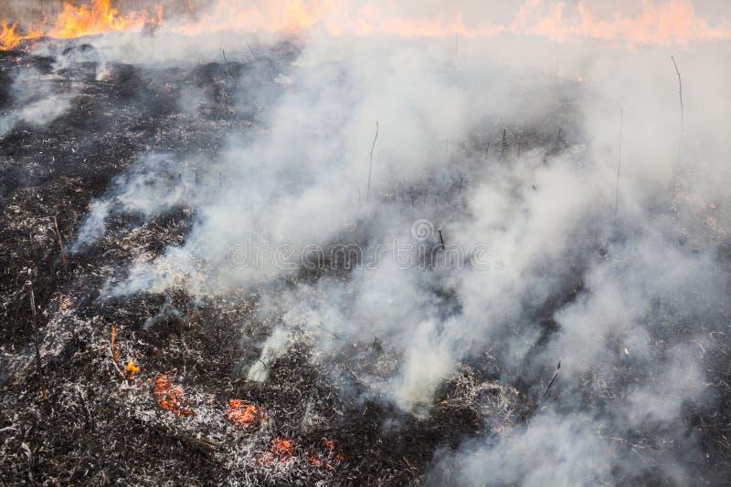 Большой огонь в поле стоковые фотографии rf