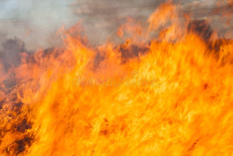 Большой огонь в поле стоковое изображение rf