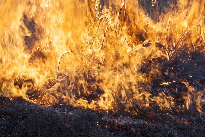 Большой огонь в поле стоковые фото