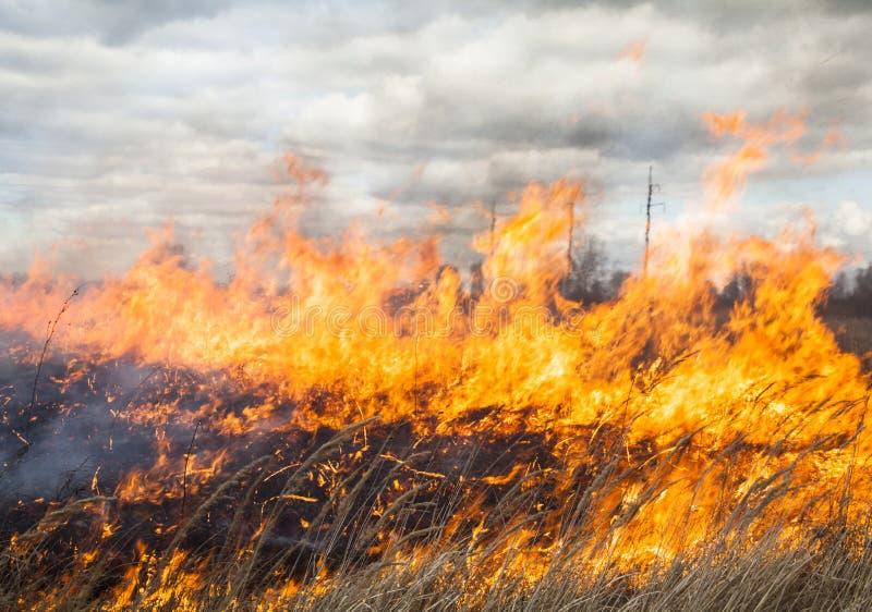 Большой огонь в поле стоковая фотография