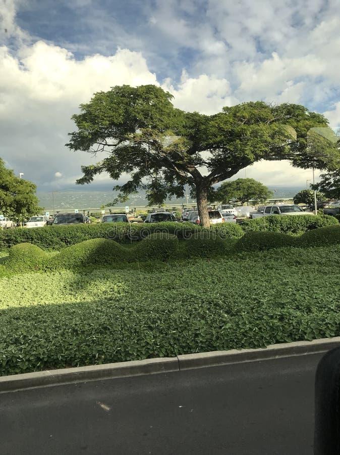 большой остров Гавайских островов стоковые изображения rf