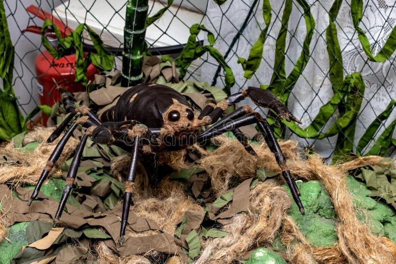 Большой паук игрушки среди ветвей и трава стоковое изображение rf