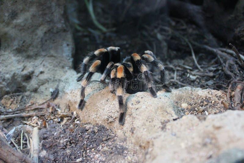 Большой паук на земле стоковые изображения rf