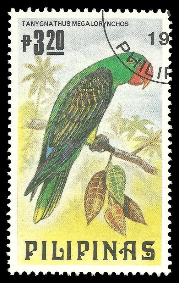 Большой представленный счет попугай стоковые фото