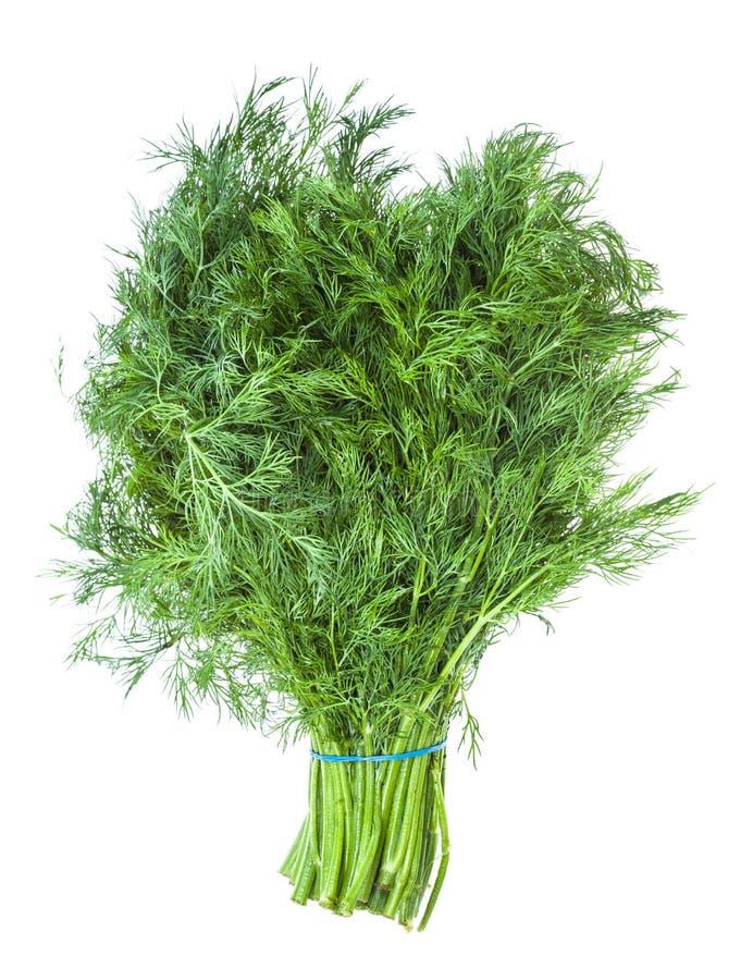 Большой пук естественной зеленой изолированной травы укропа стоковое изображение