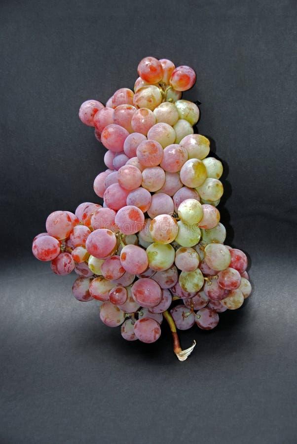 Большой пук испанских виноградин стоковая фотография