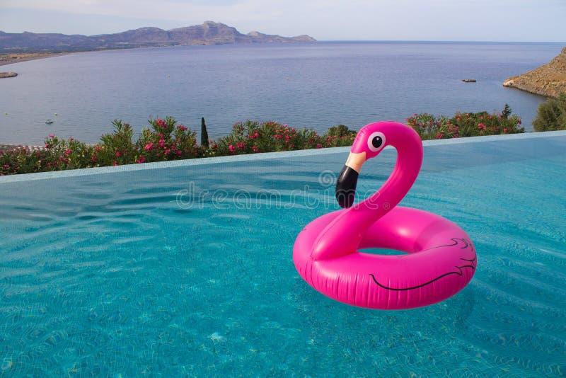 Большой розовый фламинго для sweeming в бассейне с видом на море стоковые изображения rf
