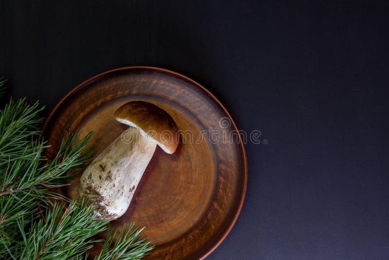 Большой свежий весь гриб стоковые фото