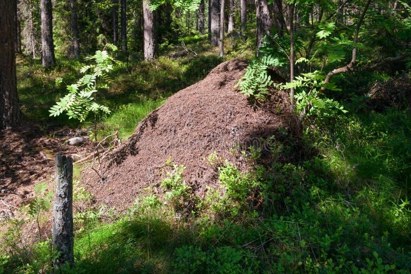 Большой anthill стоковое фото