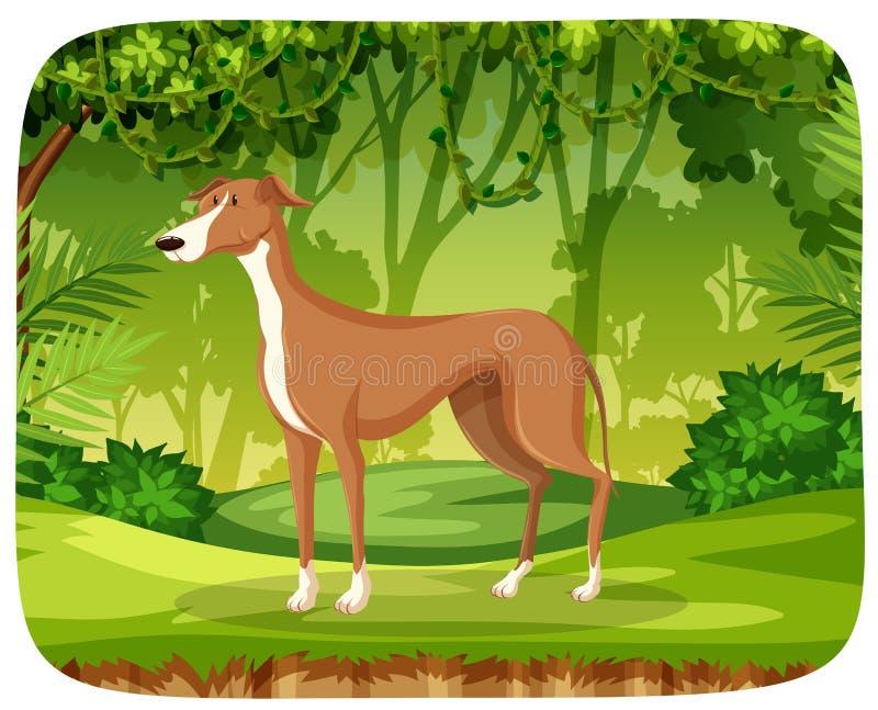 Борзая в джунглях бесплатная иллюстрация