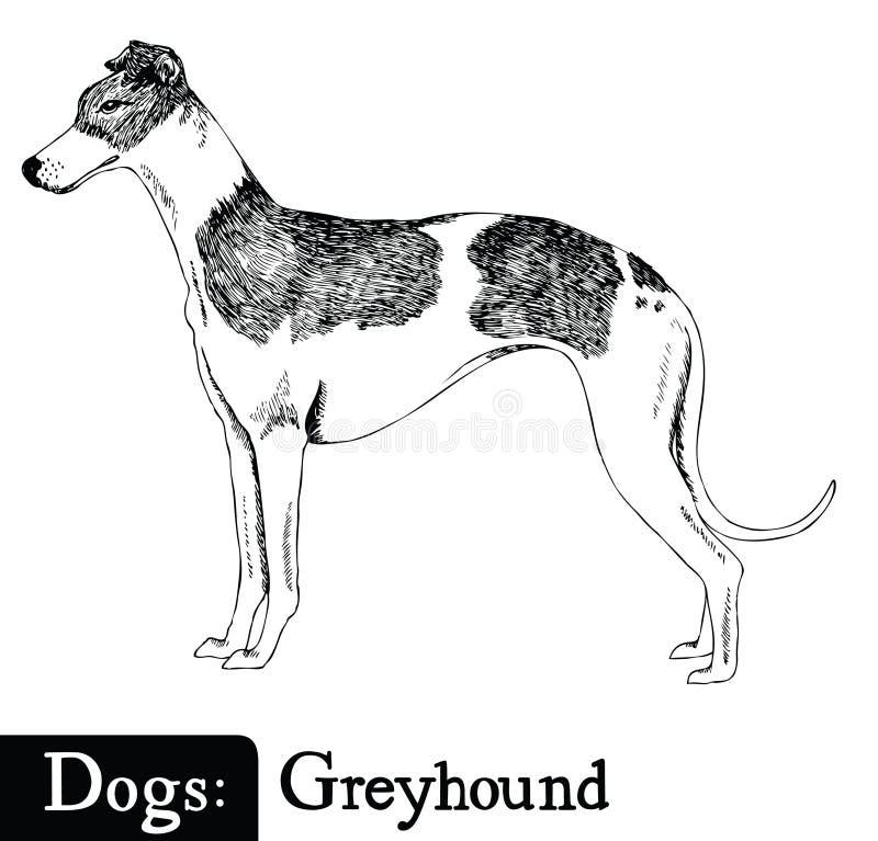 Борзая стиля эскиза собаки бесплатная иллюстрация
