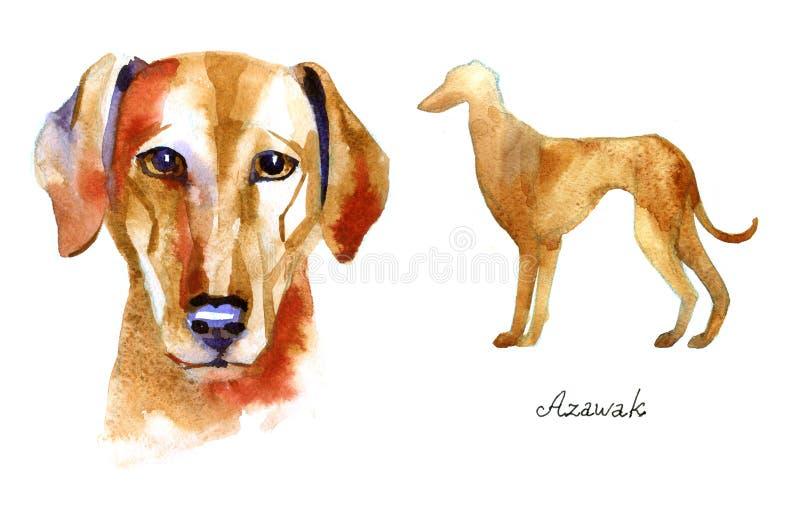Борзая Azawak Иллюстрация акварели нарисованная рукой на белой предпосылке бесплатная иллюстрация