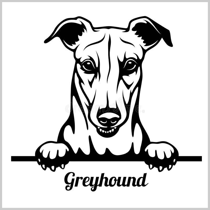 Борзая - Peeking собаки - голова стороны породы изолированная на белизне иллюстрация вектора
