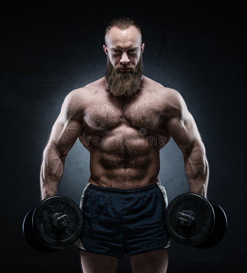 Бородатый мышечный культурист представляя с тяжелыми гантелями стоковое фото rf