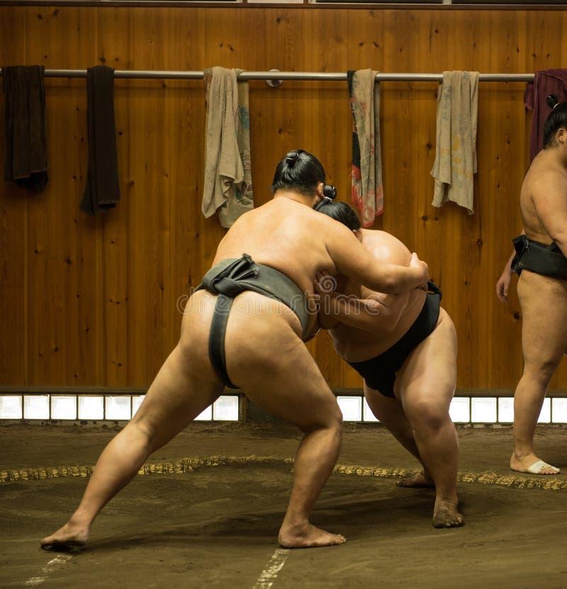 Борцы Sumo тренируя в конюшнях sumo стоковое фото