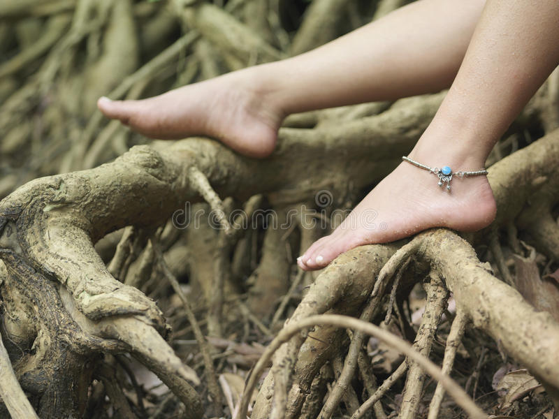 Босые ноги женщины на корнях стоковое изображение rf