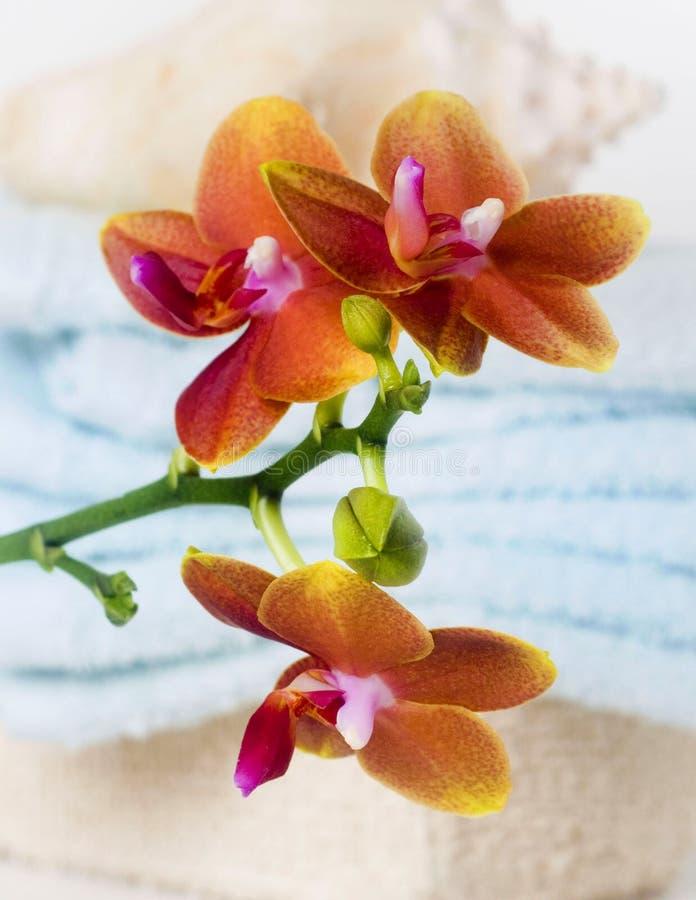 ботаническая спа съемки орхидеи жизни все еще стоковые изображения
