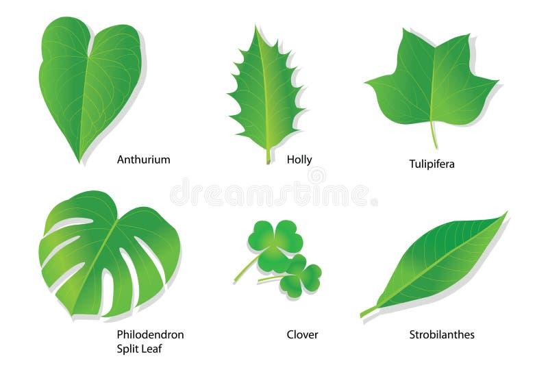 ботанические имена листьев тропические иллюстрация вектора