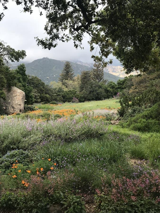Ботанические сады в Санта-Барбара, Калифорния стоковая фотография