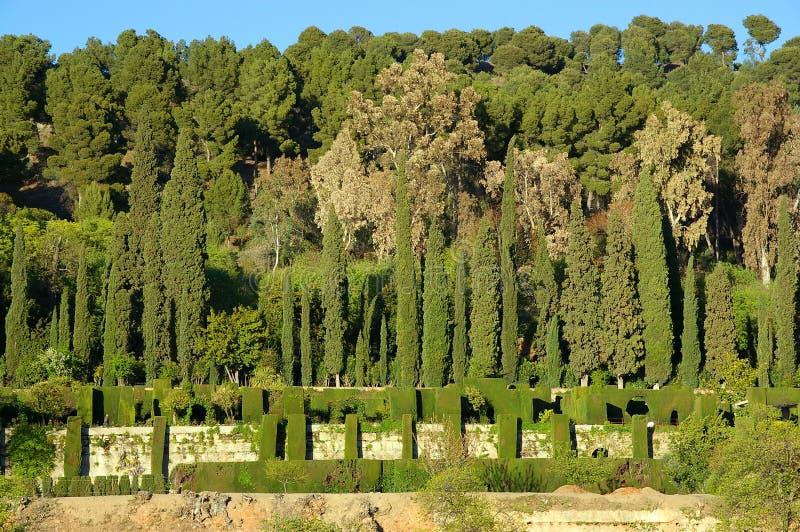 ботанические сады стоковое фото rf