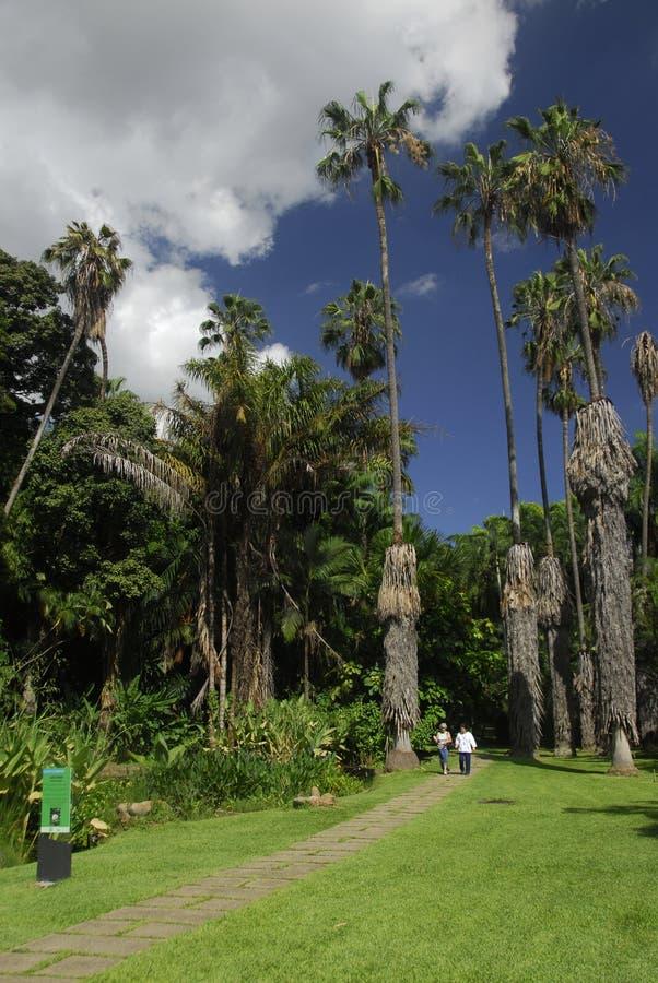 ботанические сады caracas стоковое фото rf