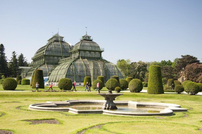 Ботанические сады и ладонь Haus на дворце Schoenbrunn, вене, Австрии стоковая фотография rf