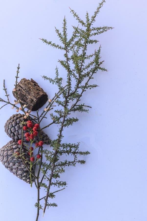Ботанический натюрморт в коричневых тонах против белизны стоковая фотография rf