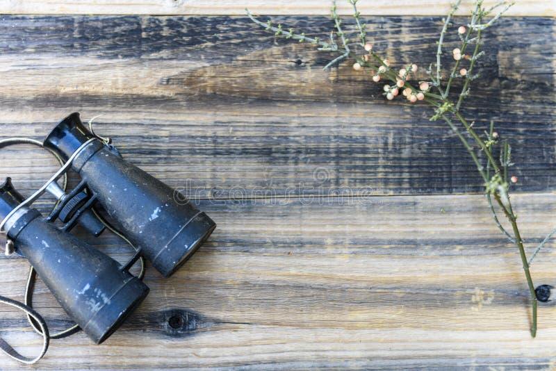 Ботанический натюрморт заводов с винтажными биноклями стоковое фото